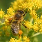 Мёд,лимон,чеснок